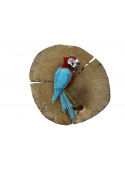 Brooches Parrot brooch with turquoise and coral - 5